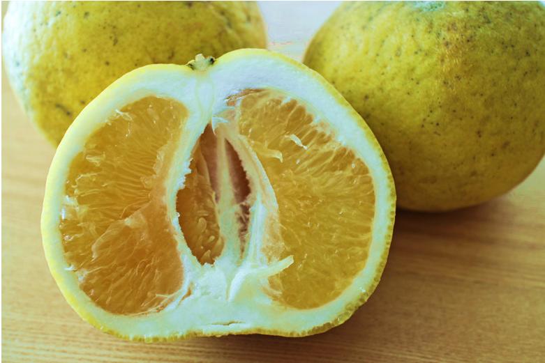 果物イメージ