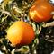 自然栽培 柑橘