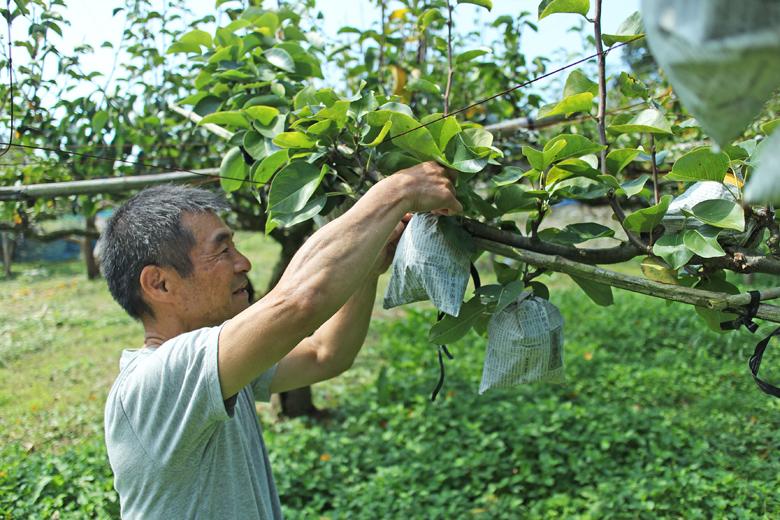 果樹栽培イメージ