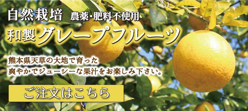 自然栽培和製グレープフルーツはこちら