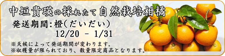 自然栽培橙(だいだい)