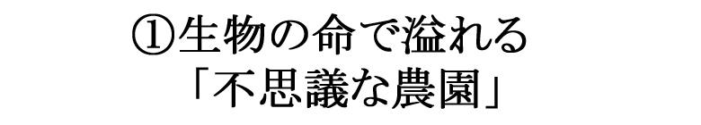 成生梨(荒尾梨)の特徴1