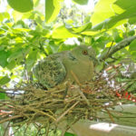 荒尾梨の木はなぜ生き物たちの楽園になるのか