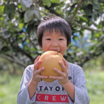 梨の中でも大きい品種の梨は?ギネス記録は新生児並み!?