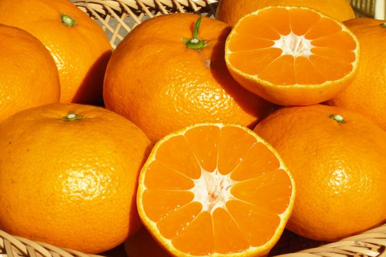 自然栽培柑橘