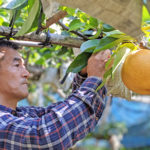 荒尾梨の無農薬栽培に35年挑む高塚さんの想い
