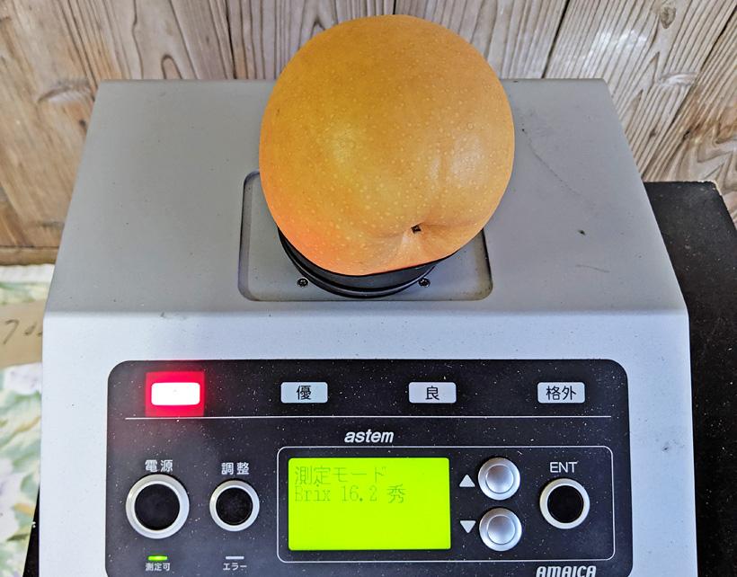 成生梨(荒尾ジャンボ梨)の糖度