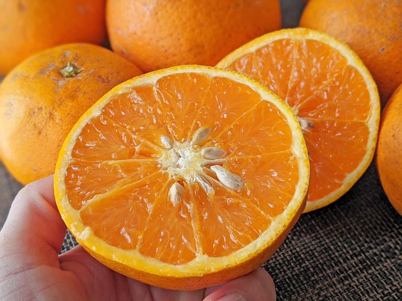 自然栽培清美オレンジ