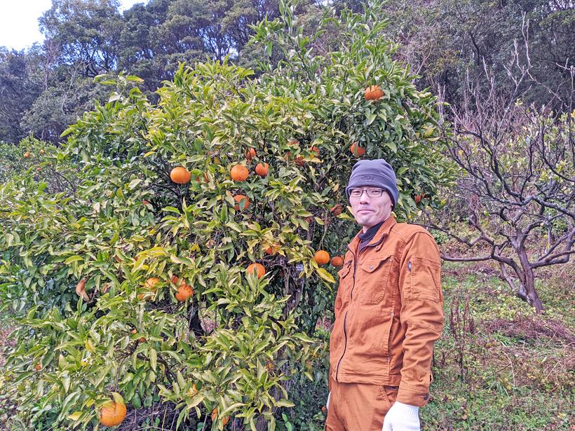 自然栽培清美オレンジと中垣貴瑛