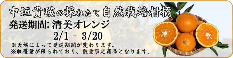 発送期間自然栽培清美オレンジ