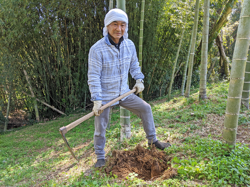 高塚成生のタケノコ掘り