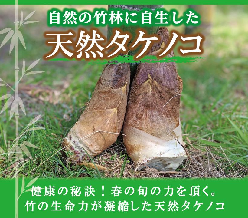 天然タケノコ