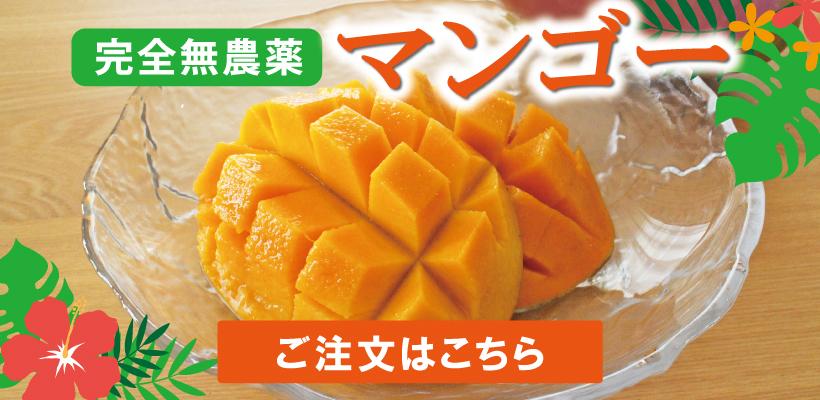 沖縄産完全無農薬マンゴーはこちら