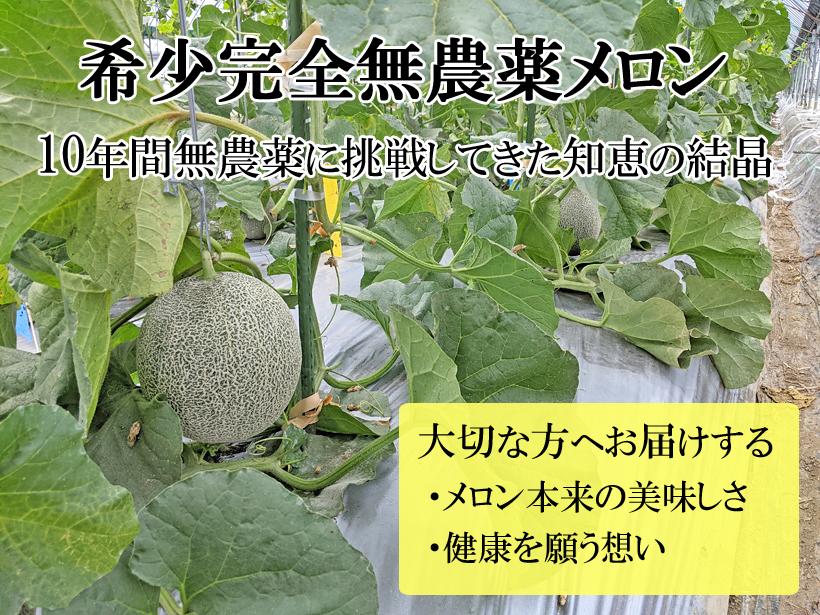 無農薬メロン